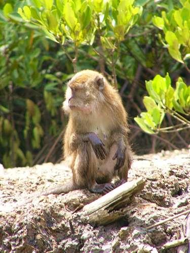 猿の画像 p1_1